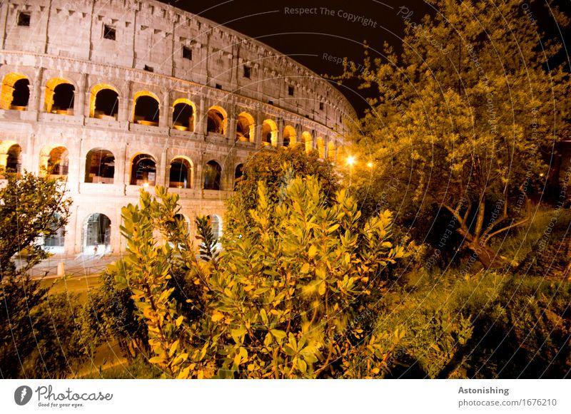 il colosseo Architektur Umwelt Natur Landschaft Pflanze Baum Sträucher Park Rom Italien Stadt Hauptstadt Haus Ruine Bauwerk Gebäude Mauer Wand Fassade