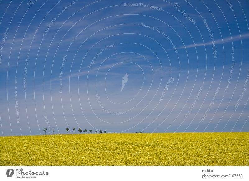 8+1 1/2 Farbfoto Außenaufnahme Menschenleer Tag Ferne Landschaft Himmel Wolken Frühling Schönes Wetter Baum Blume Nutzpflanze Feld Erholung Duft frei blau gelb