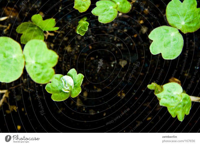 Tautropfenmakroversuch Wassertropfen Tropfen Regen Regenwasser Niederschlag Erde Pflanze sprößlinge Leitersprosse Frühling Balkon Blumentopf Aussaat Trieb