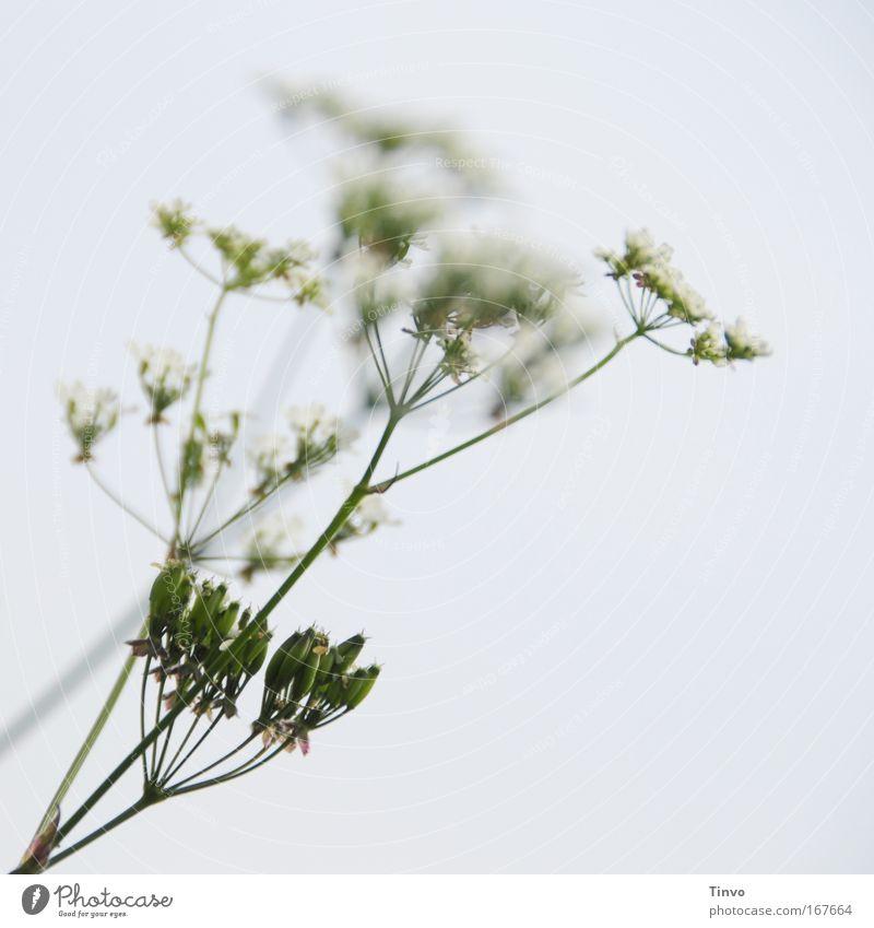 scharf, mittelscharf, gar nicht scharf Natur Pflanze Frühling Blüte Wildpflanze Farbfoto Gedeckte Farben Außenaufnahme Nahaufnahme Menschenleer Tag Unschärfe