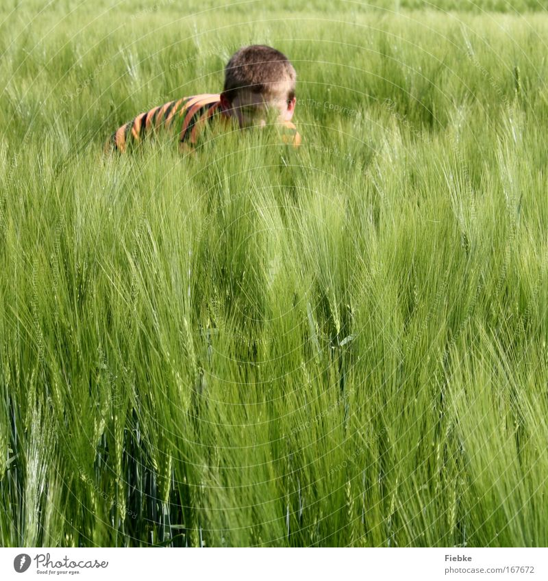 Kleiner Tiger Mensch Kind Natur Freude Sommer Leben Spielen Junge Umwelt Kopf Glück Feld Kindheit Abenteuer wild