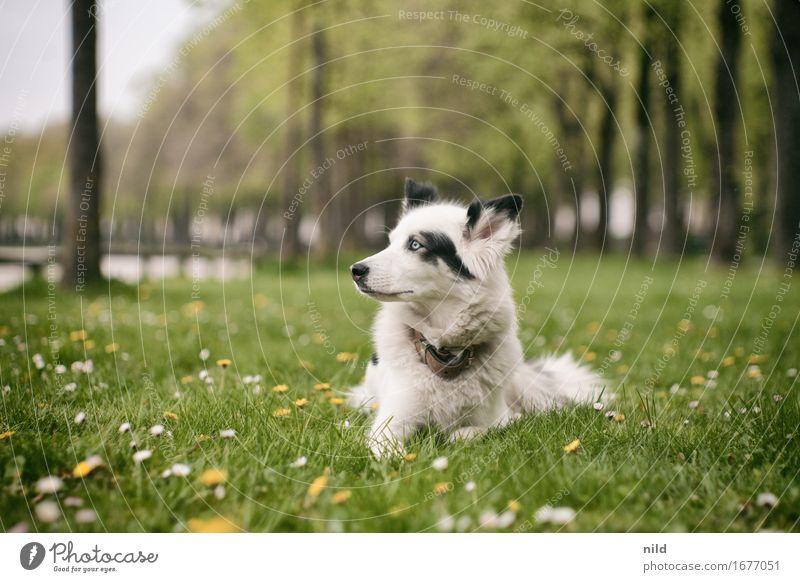 Weichtier Hund Natur Stadt Sommer schön grün Baum Landschaft Tier Umwelt Wiese Park elegant warten niedlich sportlich