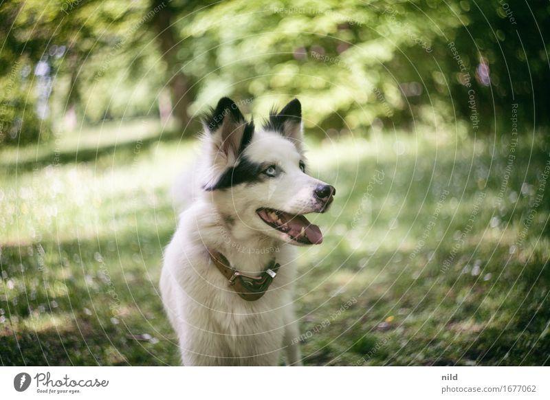 swirly dog Hund Natur Sommer schön grün weiß Landschaft Tier Wald schwarz Umwelt Wiese Garten Park Fröhlichkeit Schönes Wetter