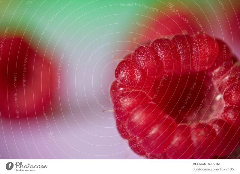 Himbeere Lebensmittel Frucht Ernährung Vegetarische Ernährung Gesundheit Gesunde Ernährung liegen lecker rot Himbeeren Beeren fruchtig Farbfoto mehrfarbig