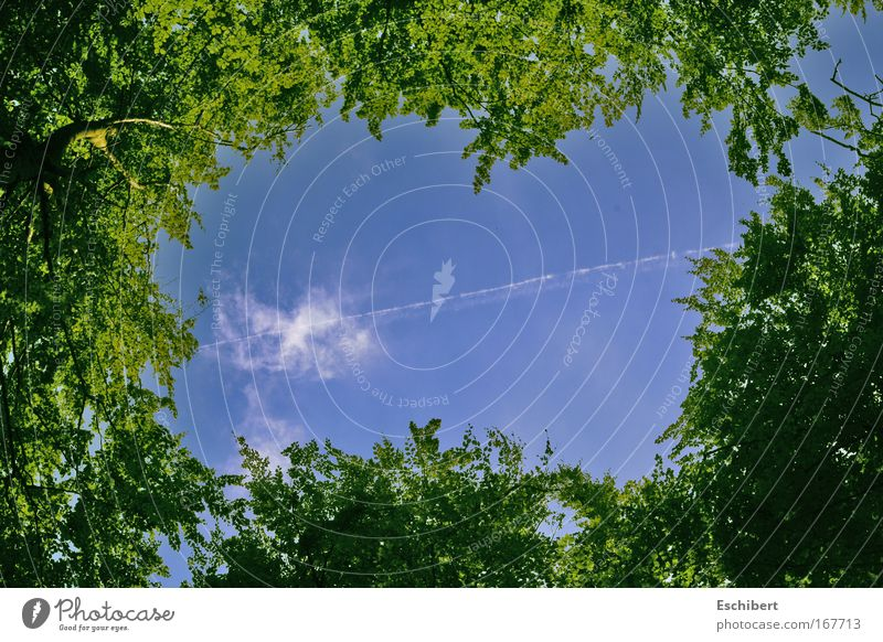 Eingerahmt Farbfoto Außenaufnahme Experiment Muster Strukturen & Formen Menschenleer Textfreiraum Mitte Hintergrund neutral Tag Schatten Kontrast Sonnenlicht
