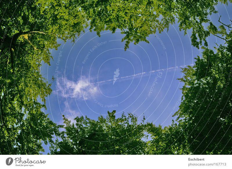 Eingerahmt Natur Himmel Baum grün blau Pflanze Wolken Wald Frühling Freiheit Wärme Zufriedenheit Kraft groß frisch