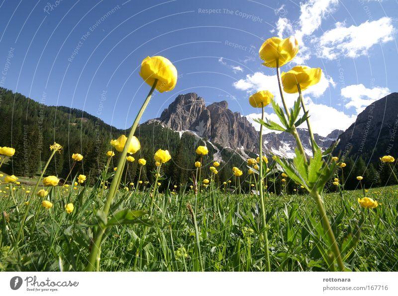 Dolomites Ladinia Farbfoto Außenaufnahme Nahaufnahme Menschenleer Textfreiraum oben Tag Licht Sonnenlicht Froschperspektive Panorama (Aussicht) Weitwinkel