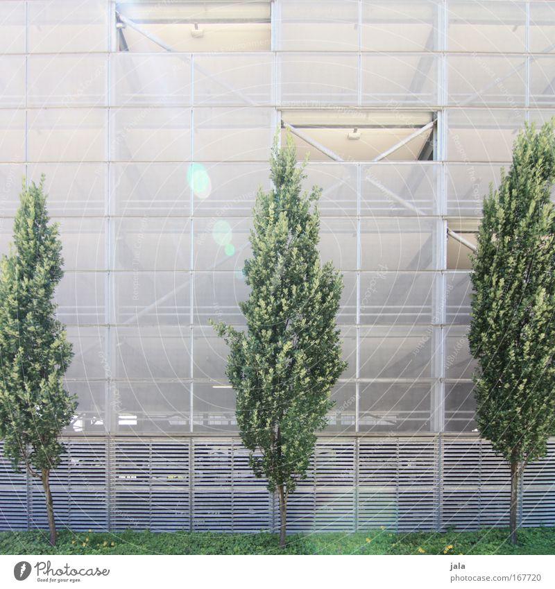 [PC-Usertreff Ffm]: Junges Grün Farbfoto Außenaufnahme Menschenleer Tag Lichterscheinung Sonnenlicht Frühling Pflanze Baum Efeu Grünpflanze Bauwerk Gebäude