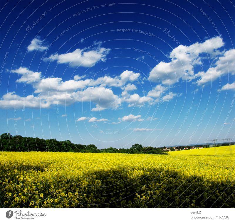 Alle Jahre wieder Himmel Natur Pflanze blau Landschaft Wolken Wald Umwelt gelb Blüte Horizont Feld Energiewirtschaft Wachstum leuchten Idylle