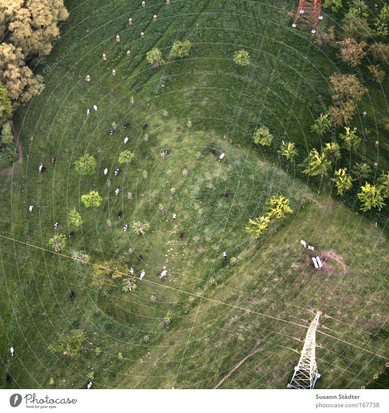 Weidenleben Natur Baum Pflanze Blatt Tier Wiese Gras Garten Park Luft Feld Umwelt Luftballon Sträucher Hügel entdecken