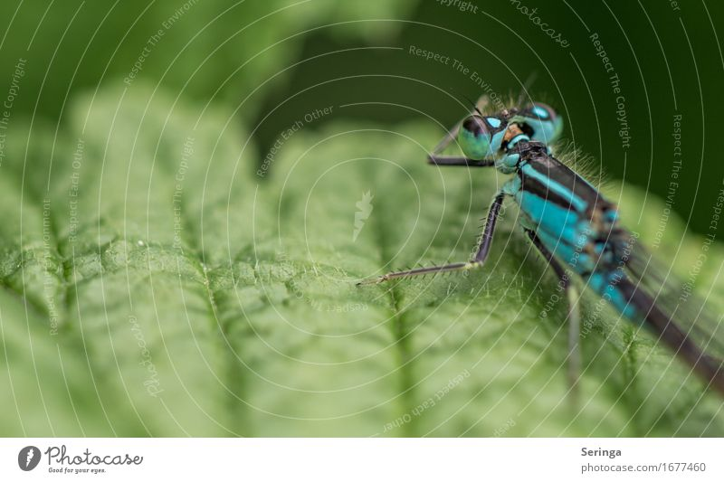 Portrait von hinten Pflanze Blatt Garten Park Wiese Wald Tier Wildtier Fliege Tiergesicht Flügel 1 fliegen Libellenflügel Prachtlibellen Farbfoto mehrfarbig