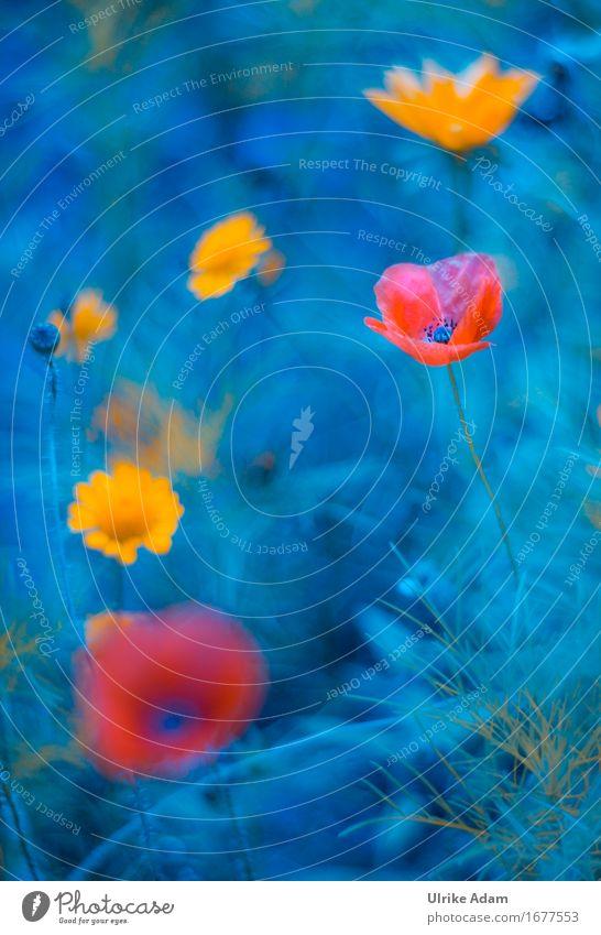 Mohntraum Natur blau Pflanze Sommer Blume Blatt Innenarchitektur Blüte Wiese Kunst Garten Design Park Dekoration & Verzierung Postkarte Wohlgefühl
