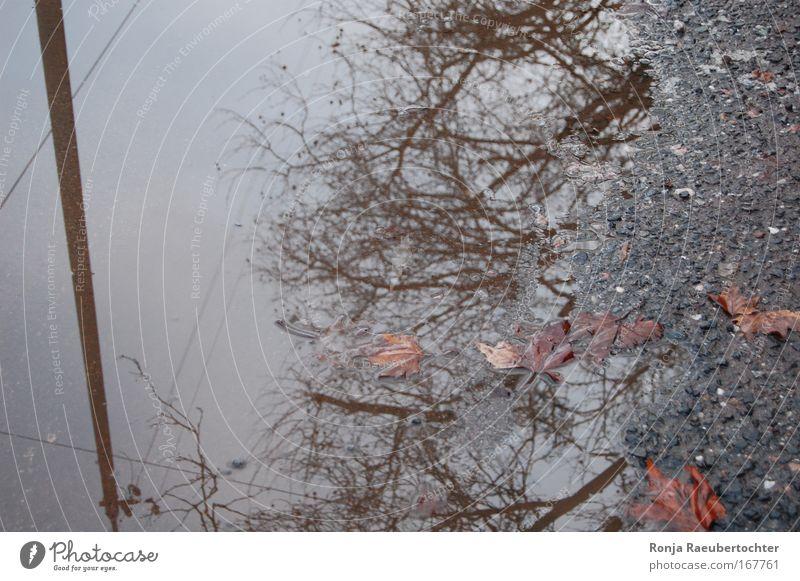 Herbst Natur alt Wasser Pflanze Blatt kalt grau Regen braun Beton Kabel Vergänglichkeit schlechtes Wetter Stadtrand