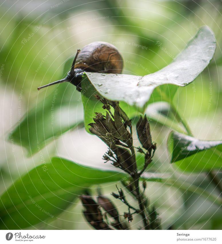 Ganz vorsichtig runter schauen Pflanze Sträucher Blatt Tier Wildtier Schnecke Tiergesicht 1 schleimig Schneckenhaus Farbfoto mehrfarbig Außenaufnahme
