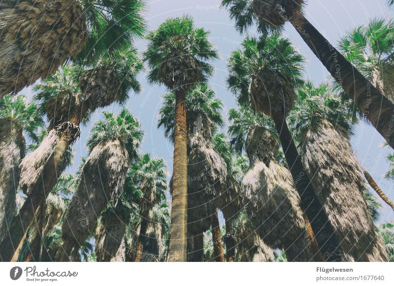 Palm Beach USA Amerika Nationalpark Berge u. Gebirge Wüste Freiheit Ferien & Urlaub & Reisen Wärme Sommer Wald Palme überblicken Überblick Baum