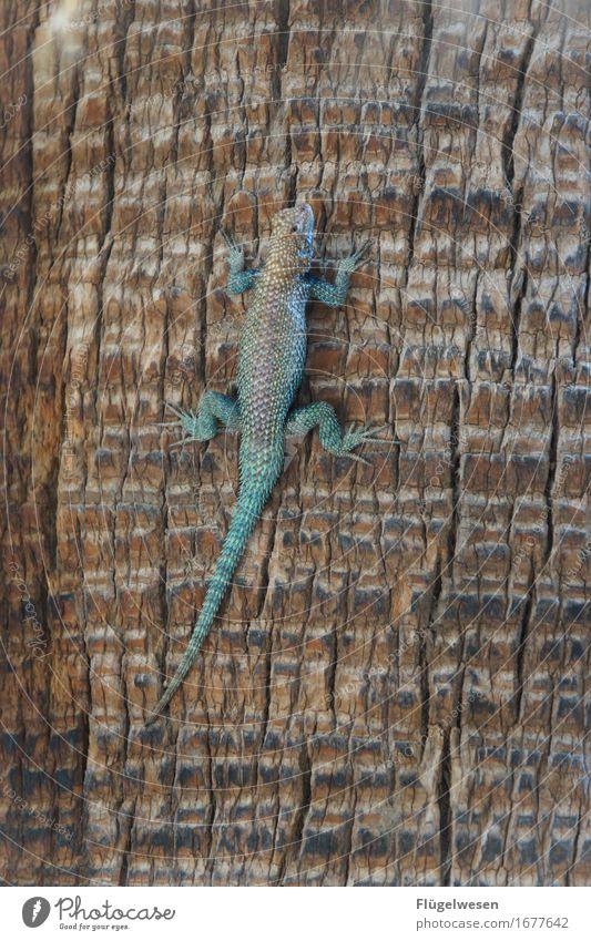 Tiere in Amerika [1] Leguane Reptil Baum Palme USA Nationalpark Leder Schwanz Klettern Tarnung verstecken krabbeln Krokodil grün braun Angst Todesangst Ekel