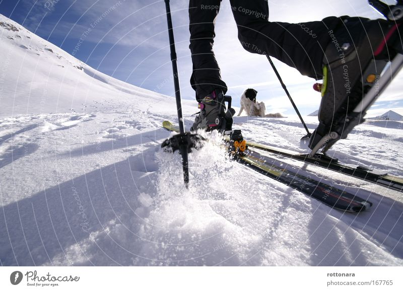 Skitour Mensch Wintersport weiß blau Ferien & Urlaub & Reisen schwarz Tier Sport Freiheit Berge u. Gebirge Hund Beine gehen Freizeit & Hobby wandern