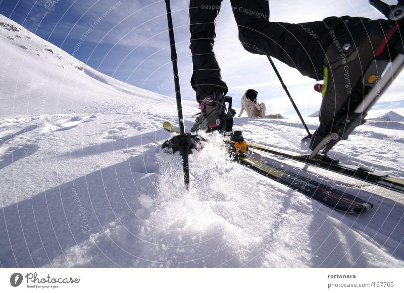Skitour Mensch Wintersport weiß blau Ferien & Urlaub & Reisen Winter schwarz Tier Sport Freiheit Berge u. Gebirge Hund Beine gehen Freizeit & Hobby wandern
