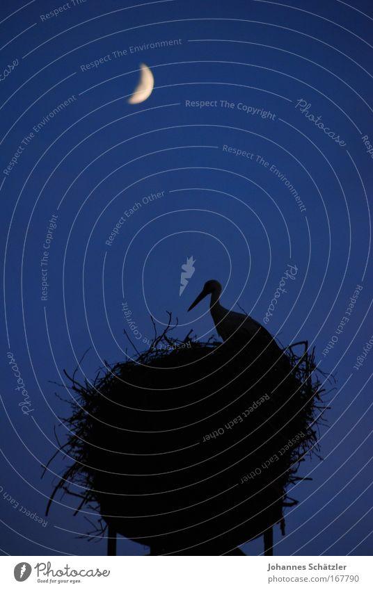 Nachtwächter Tier Vogel oben hoch groß beobachten Mond Schnabel Schornstein bauen Nachthimmel füttern Storch Mondschein Brunft Nestbau