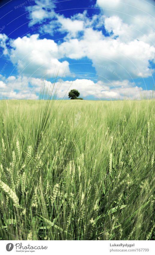 Kurzsichtig Umwelt Natur Landschaft Luft Himmel Wolken Horizont Sommer Schönes Wetter Pflanze Baum Gras Grünpflanze Feld frei Unendlichkeit hoch oben positiv