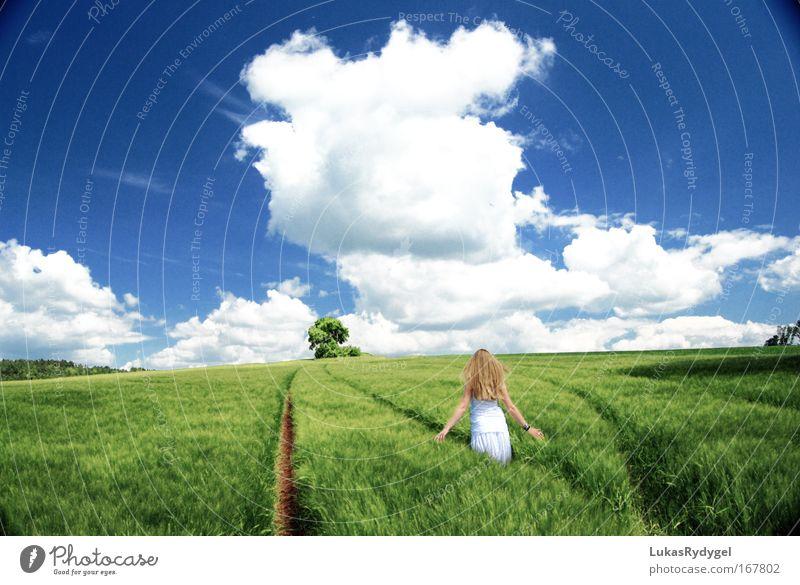 Hinter dem Horizont Frau Mensch Himmel Natur Jugendliche Baum Pflanze Sommer Wolken Erwachsene feminin Umwelt Landschaft Gras Haare & Frisuren Glück