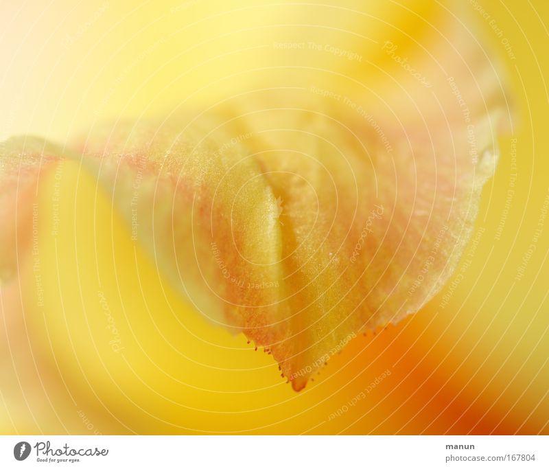 ensoleillé schön Pflanze Sommer ruhig gelb Erholung Blüte Frühling Park Zufriedenheit hell Feste & Feiern Design frisch ästhetisch natürlich