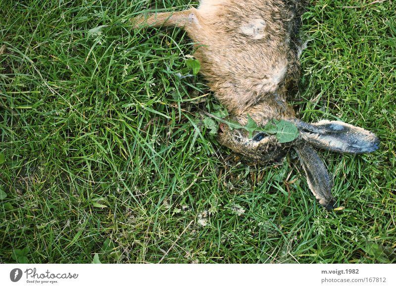 Tiersterben I Farbfoto Außenaufnahme Textfreiraum links Textfreiraum unten Vogelperspektive Tierporträt Umwelt Natur Pflanze Gras Wiese Wildtier Totes Tier