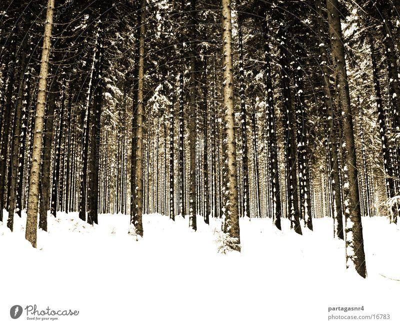 Ich seh´ den Wald nich Winter Wald Schnee Sepia Fichte