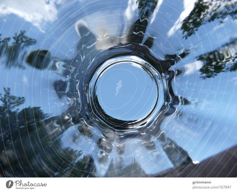 Glashimmel Farbfoto Außenaufnahme abstrakt Menschenleer Textfreiraum unten Tag Schatten Himmel Pflanze Baum Grünpflanze Wildpflanze Stadtrand Frühlingsgefühle