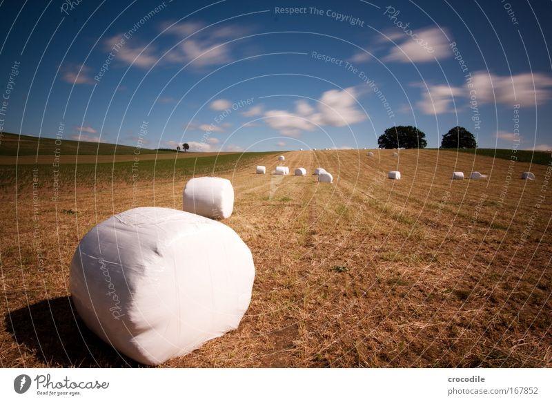 Marshmallow Feld VII Farbfoto Außenaufnahme Menschenleer Textfreiraum rechts Textfreiraum oben Tag Kontrast Bewegungsunschärfe Starke Tiefenschärfe