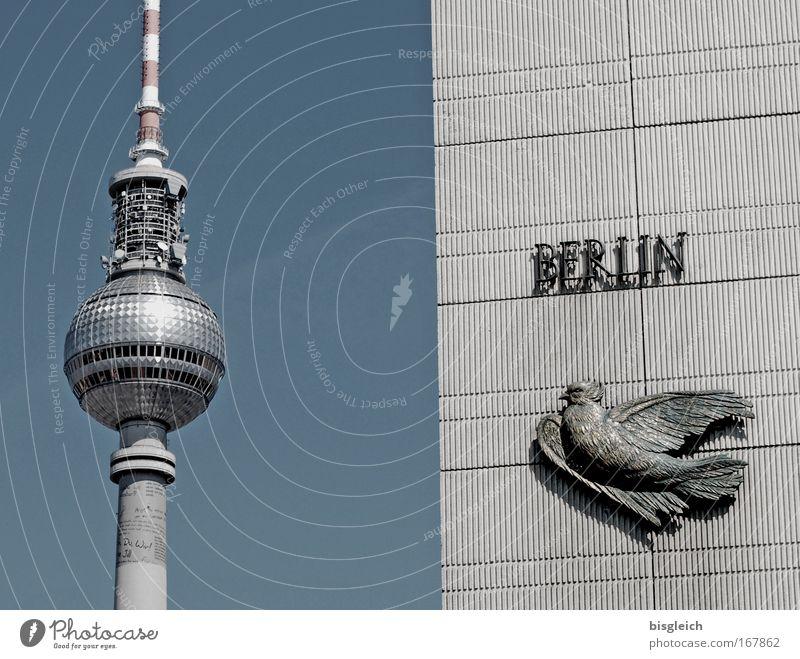 Berlin-Postcard blau Berlin Vogel Deutschland Europa Wahrzeichen Stadtzentrum Berliner Fernsehturm Hauptstadt Sehenswürdigkeit Alexanderplatz