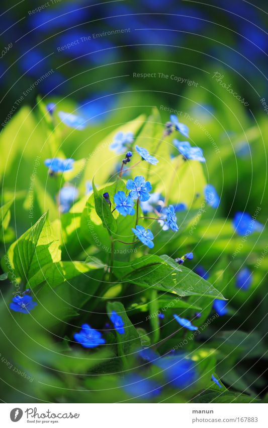 daylight blau Pflanze schön grün Erholung ruhig Frühling Blüte Stimmung Park Zufriedenheit Dekoration & Verzierung frisch Wohlgefühl Duft harmonisch