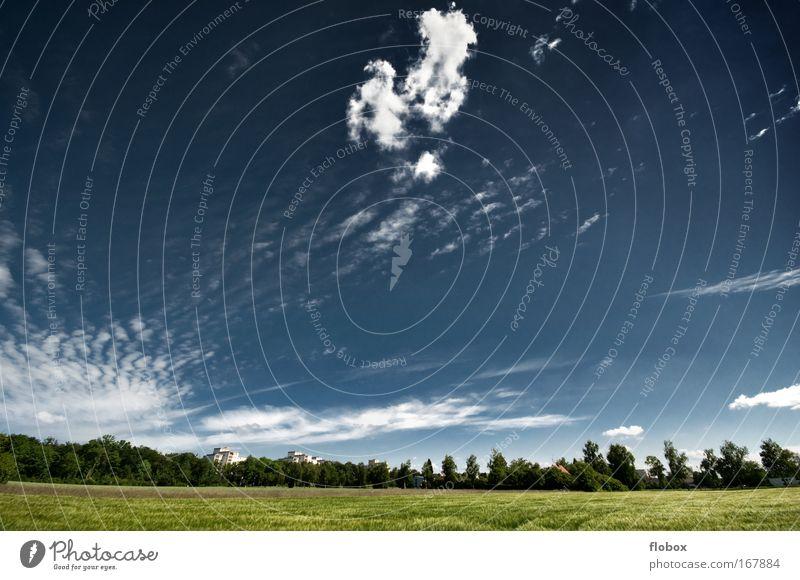 Vorstadt Sommer wandern Umwelt Natur Landschaft Pflanze Himmel Wolken Klimawandel Wiese Feld Wald groß blau grün Einsamkeit Idylle Umweltschutz Klimaschutz