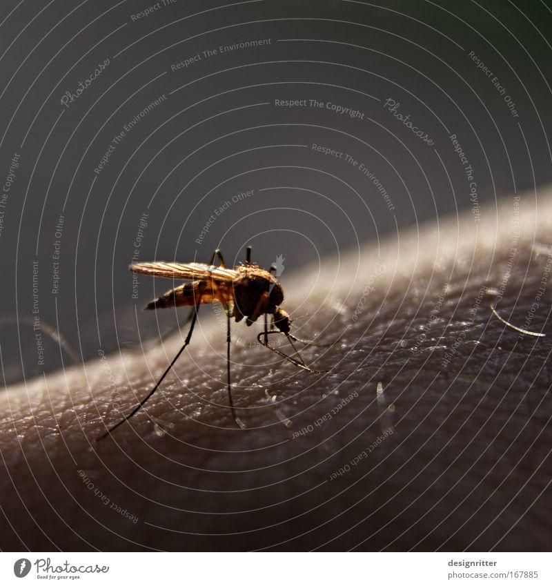 nächtlicher Damenbesuch Natur Mann Erwachsene Wärme Haare & Frisuren Garten Beine träumen fliegen Haut Arme Ernährung schlafen Flügel trinken Fressen