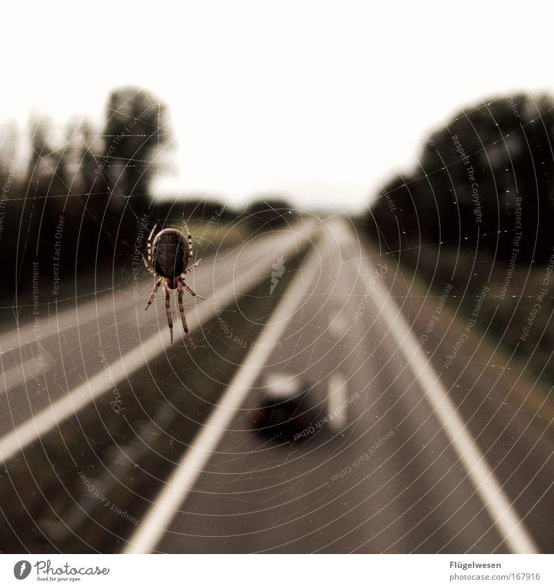 Du spinnst ja wohl - Richtig! Farbfoto Außenaufnahme Unschärfe Landschaft Verkehr Verkehrswege Straßenverkehr Autofahren Autobahn Hochstraße Brücke Fahrzeug PKW