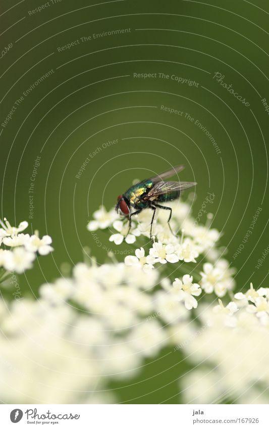 Blumen und Bienen… äh, Fliegen Farbfoto Außenaufnahme Nahaufnahme Textfreiraum oben Tag Schwache Tiefenschärfe Natur Pflanze Tier Schönes Wetter Blüte