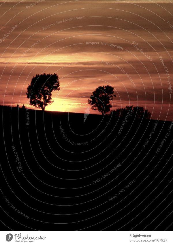 Liebespaar geht mit Sonne unter Himmel Baum Sommer schwarz Wiese Gefühle Park Zufriedenheit Feld Sonnenuntergang Beginn paarweise Pause außergewöhnlich Ende berühren