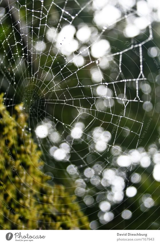 Perfect tearscatcher Natur Wasser grün Sommer Umwelt nass Wassertropfen feucht Tau Spinnennetz Netz Spinngewebe netzartig