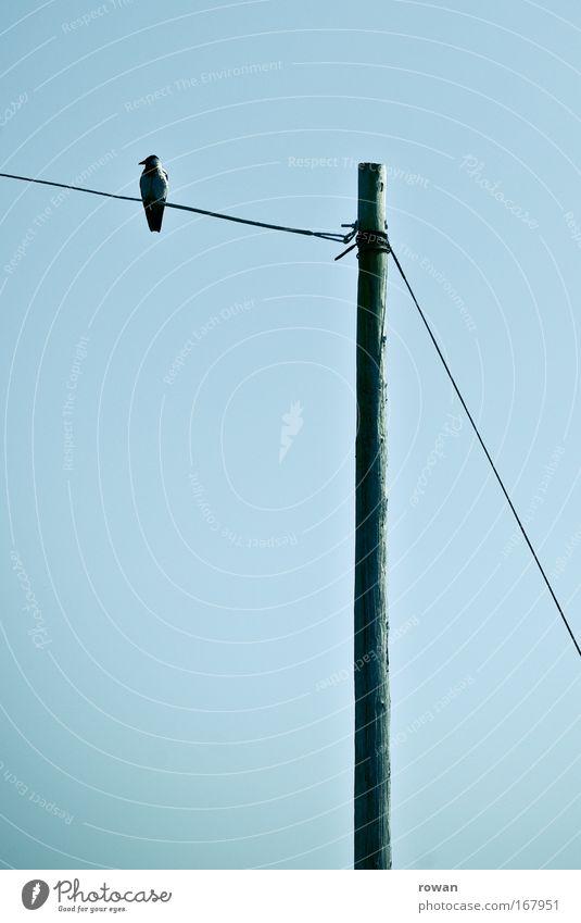 kontemplation ruhig Tier dunkel Traurigkeit Denken Zufriedenheit Vogel warten sitzen trist Kabel beobachten gruselig Gelassenheit Strommast geduldig