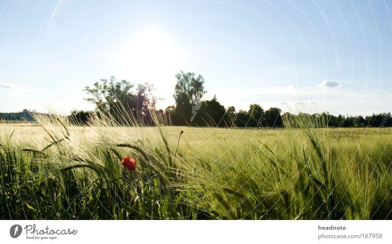 Draussen ist das neue drinnen Natur Himmel Baum Sonne Pflanze Sommer Wolken Tier Blüte Gras Frühling Freiheit Denken Wärme Landschaft Feld