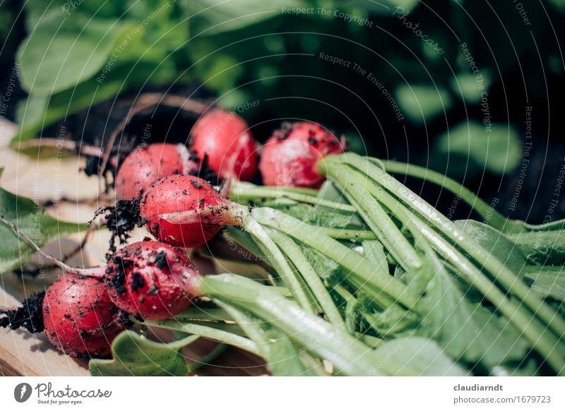 Hochbeet-Ernte Lebensmittel Gemüse Radieschen Ernährung Bioprodukte Vegetarische Ernährung Slowfood Umwelt Natur Pflanze Sommer Nutzpflanze Garten frisch