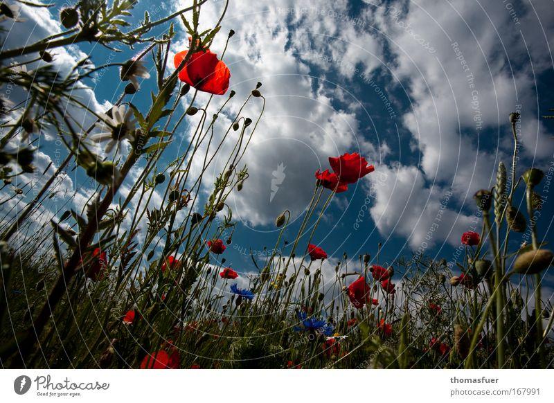 SOMMER!!!! Himmel Natur Sommer Freude Blume Wolken Glück Feld groß Fröhlichkeit Klima Mohn Lebensfreude Lust Schönes Wetter Optimismus