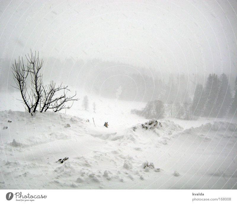 Winter Schwarzweißfoto Außenaufnahme Menschenleer Tag Zentralperspektive Erholung ruhig Schnee Winterurlaub wandern Natur Landschaft Schneefall Sträucher