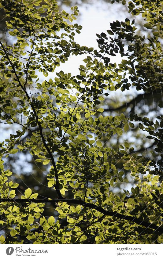 WALDLEUCHTEN Natur schön Baum Blatt Wald Beleuchtung gehen Spaziergang Ast Idylle leuchten Lichtstrahl