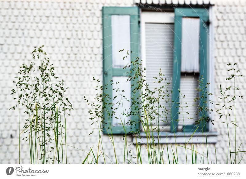 AST 9   Vorgarten Lifestyle Häusliches Leben Wohnung Haus Traumhaus Garten Renovieren Pflanze Gras Grünpflanze Wildpflanze Wiese Hütte grün weiß Fenster