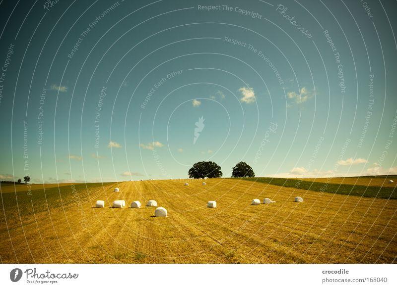 Marshmallow Feld IX Natur Himmel Baum grün blau Pflanze Sommer Wolken gelb Gras Landschaft Zufriedenheit Umwelt Horizont Hoffnung