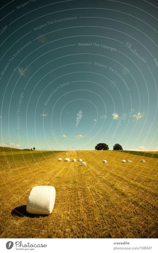 Marshmallow Feld X Natur Himmel Baum grün Pflanze Sommer Freude Wolken Ferne Gefühle Gras Landschaft Feld Wetter Umwelt Erde