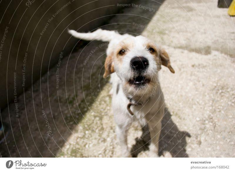 Farbfoto mehrfarbig Außenaufnahme Experiment Menschenleer Morgen Zentralperspektive Tierporträt Blick in die Kamera Haustier Hund 1 Aggression Bewegung Farbe