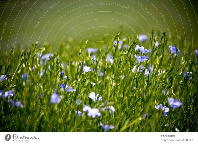flowers in green Farbfoto Außenaufnahme Menschenleer Textfreiraum oben Tag Sonnenlicht Schwache Tiefenschärfe Froschperspektive Blick nach vorn Natur Pflanze