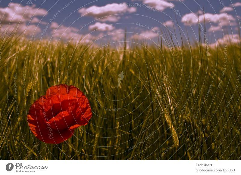Schön aber Einsam Natur schön Himmel Blume grün blau Pflanze rot Wolken Einsamkeit Bewegung Frühling Wärme Kraft Feld